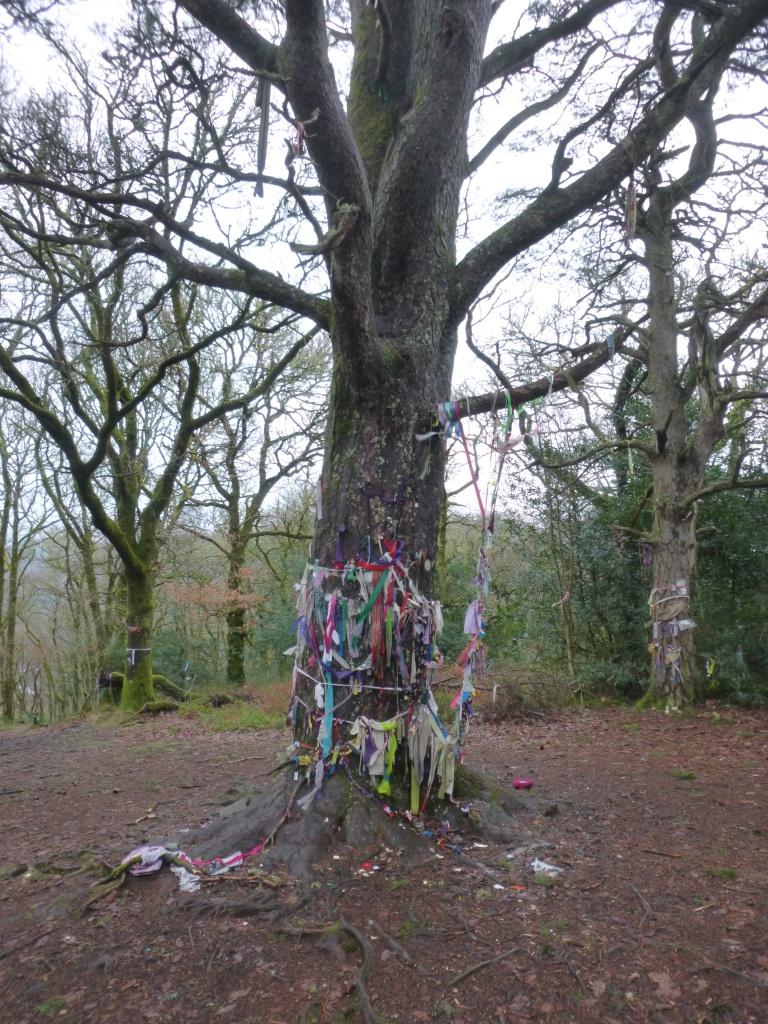 Minister's Pine, Aberfoyle, Scotland, Highlands